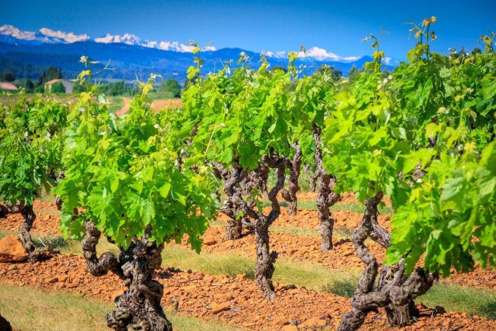 vue sur les vignes de Fontsainte