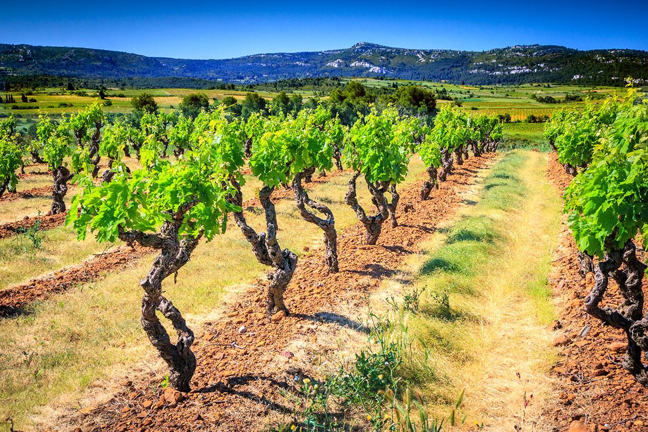 vignes et corbières