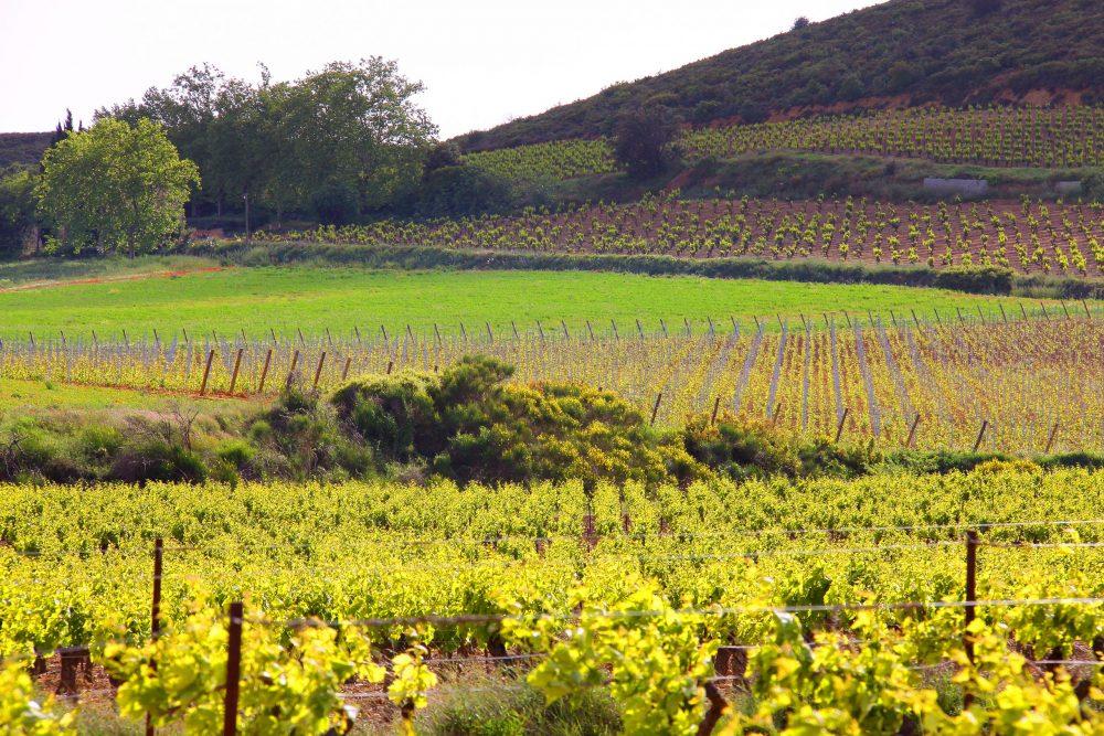 plusieurs parcelles de vignes